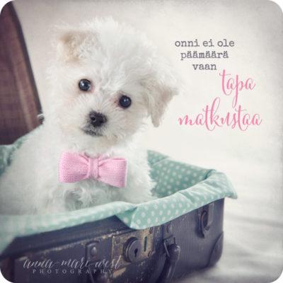 Koira ja matkalaukku onni onnellisuus kortti West