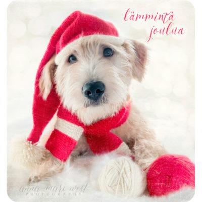 Koira jouluna tonttulakki joulukortti West