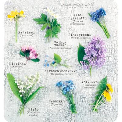 Keväinen-kukkataulu