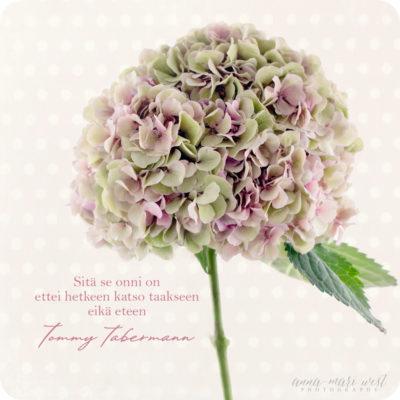 Onni-ja-hortensia